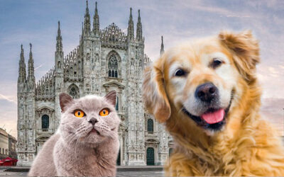 Pets in the city in Limousine